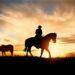 cowboy bild als bild für artikel die cowboys vom camping aufenfeld