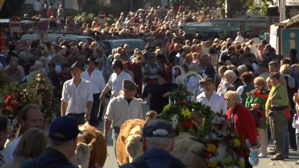 Ankunft der Kühe und Bauern im Heimatdorf