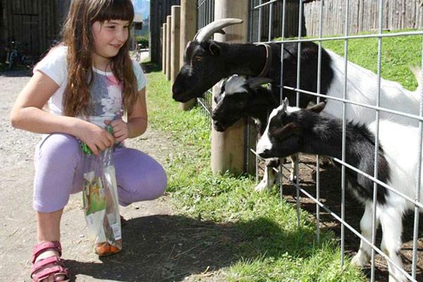 Mädchen mit kleinen Ziegen
