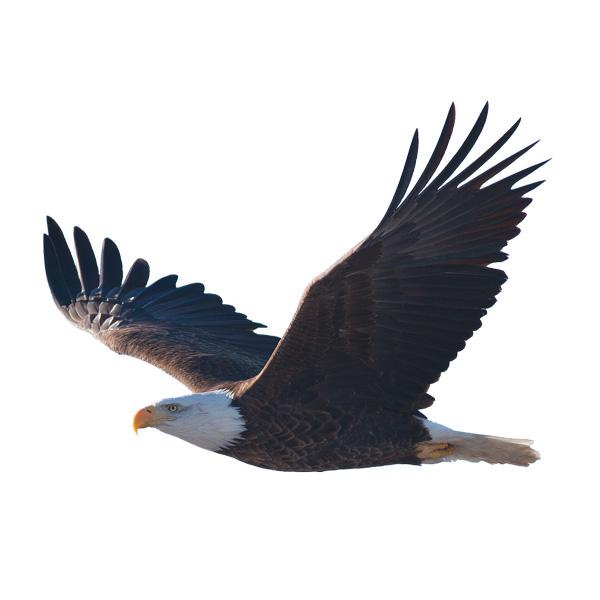 Adler Tiere der Zillertaler Bergwelt