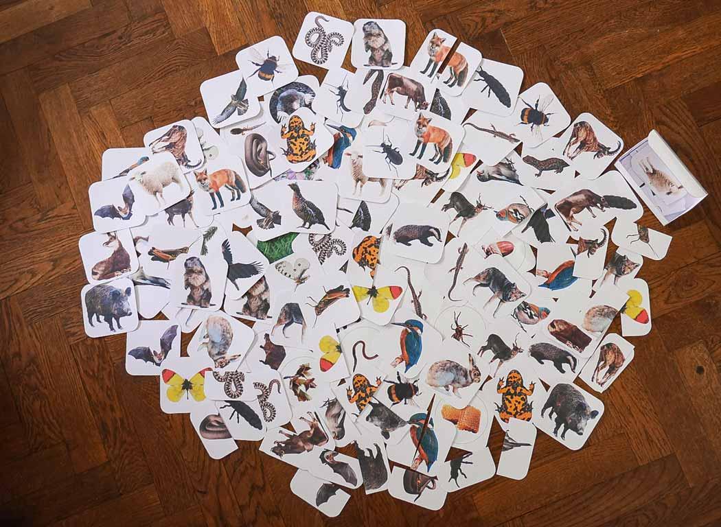Karten für die Spiele Tiere der Zillertaler Berge