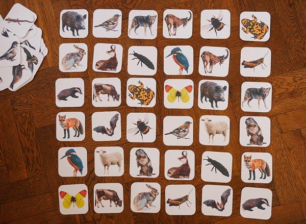 Memo Karten zum Memory Spiel Tiere der Zillertaler Berge